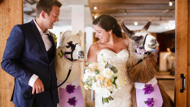 Exotic animals becoming new must-have at weddings