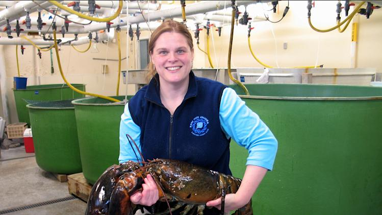 """Maine State Aquarium Director Aimee Hayden-Rodriques holds a 27 pound, nearly 40 inch long, lobster caught by Robert Malone off the coast of Maine near Rockland, Maine on Feb. 17, 2012. The aquarium named the crustacean """"Rocky."""" (AP Photo/Maine State Aquarium)"""