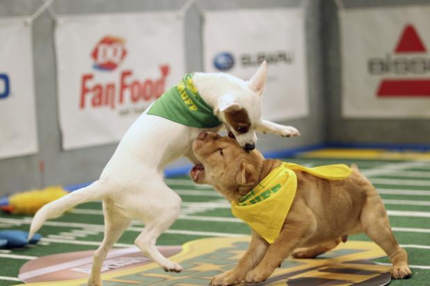 'Puppy Bowl XII' Paws Its Way to 2.2 Million Viewers