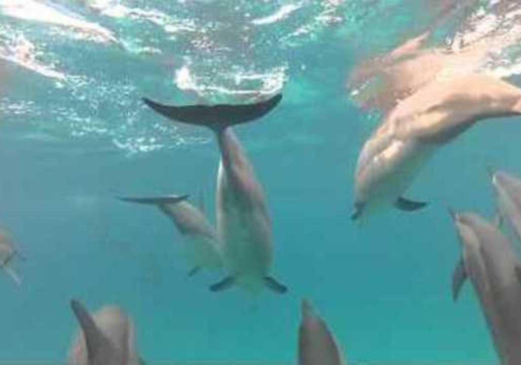 Underwater cameras capture mesmerizing video of dolphins, orcas and humpback whales