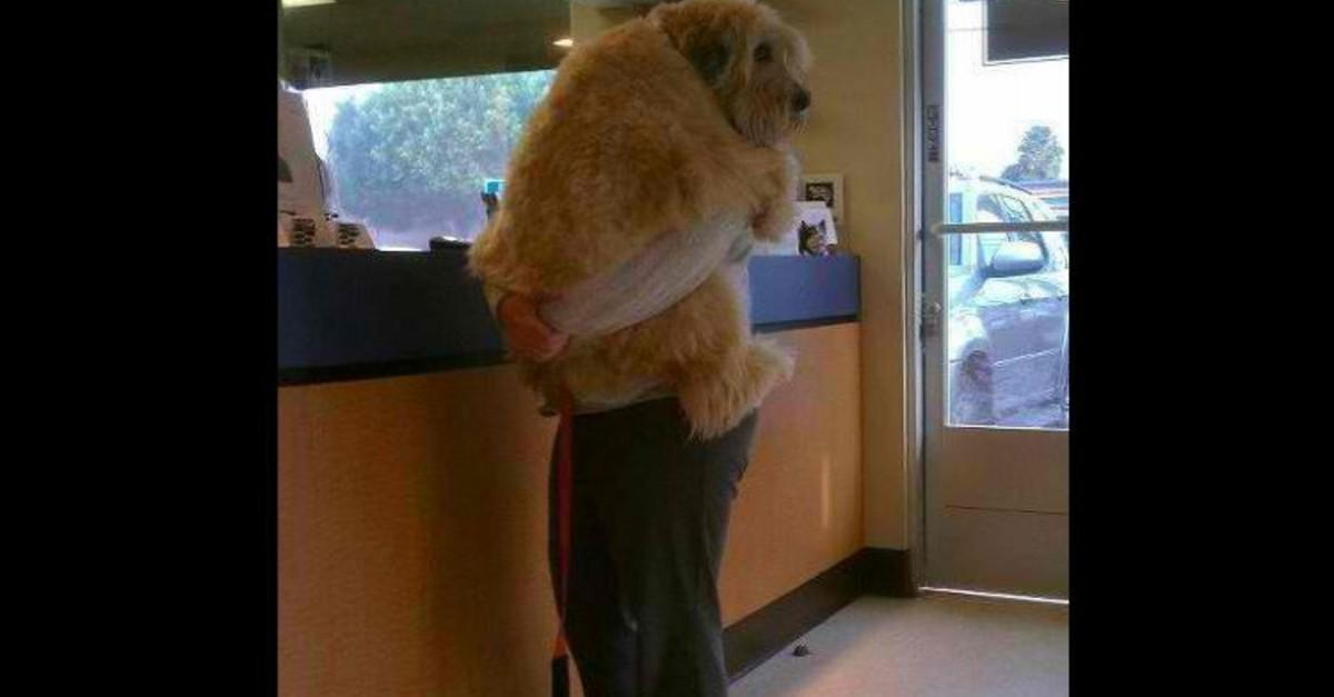 17 Things Only Dog Lovers Understand