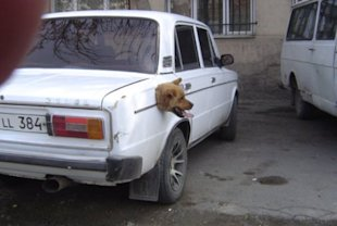 Go, Dog, Go: 7 Awesome Pictures of Canines in Cars