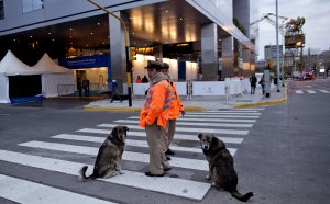 Two street dogs sit next to police standing guard in…