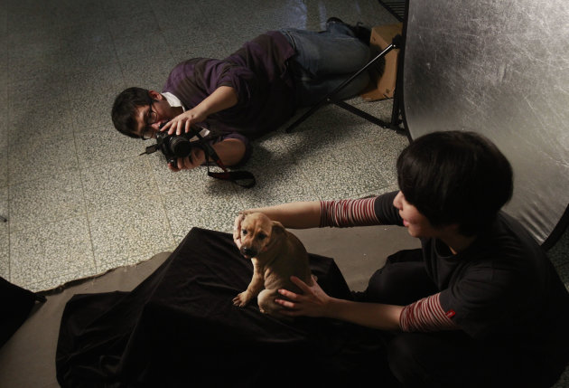 In this photo taken on Monday, April 9, 2012, iIn a makeshift studio, Taiwanese photographer Tou Chih-kang tries to make a portrait of a puppy in the final moments of its life before being put down by
