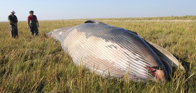 whale1_144523.jpg