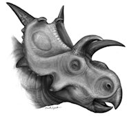 <i>Xenoceratops</i>, a newly discovered Cretaceous-era dinosaur,likely grazed on cattails and ferns in a primeval forest in what is now Canada.