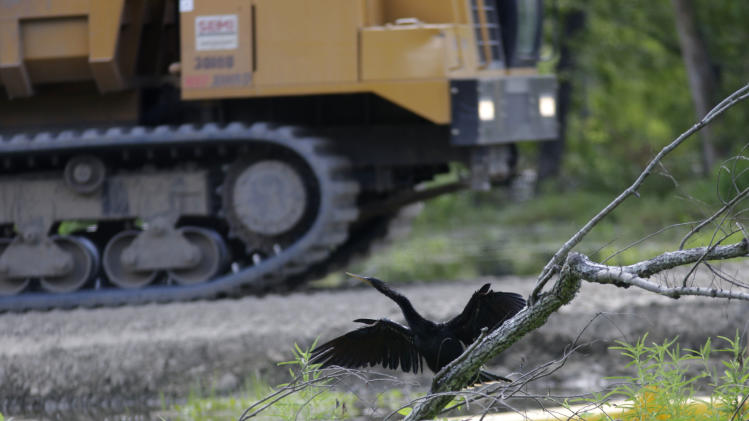 In this Thursday, June 27, 2013 photo, a bird is seen as heavy equipment passes along a berm, built to contain an approximate 22-acre sinkhole in Bayou Corne, La. Neighbors in tiny Bayou Corne face a wrenching decision after a huge sinkhole opened up near their community: Do they stay put or should they pack up and move? The sinkhole resulted from a collapsed underground salt dome cavern about 40 miles south of Baton Rouge. After oil and natural gas came oozing up and acres of swampland liquefied into muck, the community's 350 residents were advised to evacuate. Texas Brine Co., the operator of the salt dome, is negotiating buyouts of residents who have not joined lawsuits against the company. (AP Photo/Gerald Herbert)