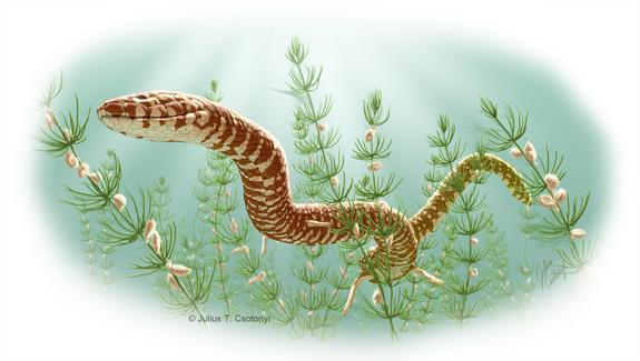 Oldest Known Snake Fossils Identified