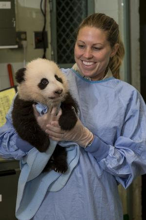 It's Official! San Diego Panda Cub Gets a Name