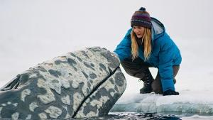 The Whale Tale 'Big Miracle' Among Genesis Awards Nominees
