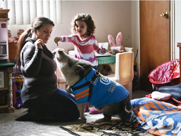 Danielle Forgione and her daughter, Olivia, 3, play with Petey, the family's pet pig, on Thursday, March 21, 2013, in the Queens borough of New York. Forgione is scrambling to sell her second-floor ap