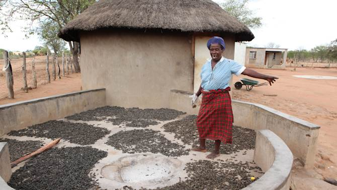 In this photo taken Monday Jan. 7, 2013, Mavis Nkomo shows her mopane worms which she leaves to dry in the open after harvesting them in Gwanda, Zimbabwe. In Zimbabwe as well as most parts of southern Africa, mopane worms are a staple part of the diet in rural areas and are considered a delicacy in the cities. They can be eaten dry, as crunchy as potato chips, or cooked and drenched in sauce. (AP Photo/Tsvangirayi Mukwazhi)