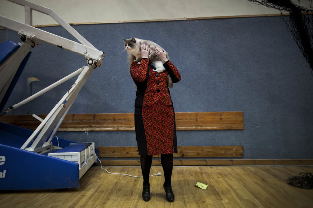 In this June 14, 2012 photo, Natalia Lerner, who immigrated to Israel in 1991 from the city of Tyumen in Siberia, presents her cat to the judges of a cat competition in the central Israeli city of Hol