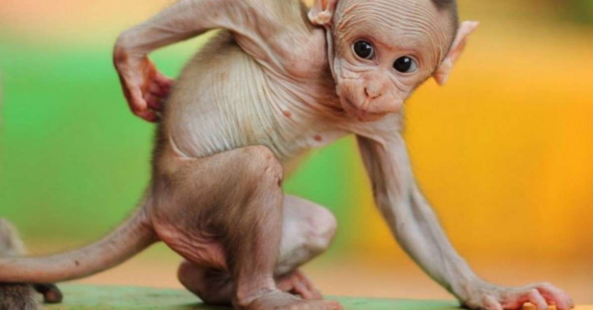 14 Animals Strangely Naked Without Their Hair