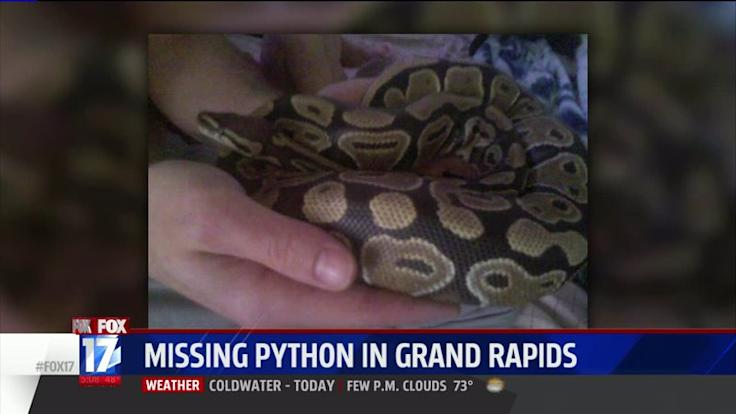Family Loses Python at KFC