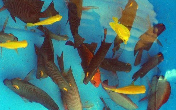 Female Fish Are More Attracted to Bi-Curious Males