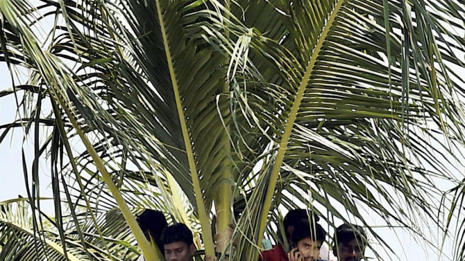 Indian youth watch from atop a coconut tree the funeral ceremony of former President A.P.J. Abdul Kalam in Rameswaram, India, Thursday, July 30, 2015.Tens of thousands of people gathered in the southern Indian town of Rameswaram on Thursday for the burial of Kalam, known as the father of the country's missile program.(R Senthil Kumar/Press Trust of India via AP)