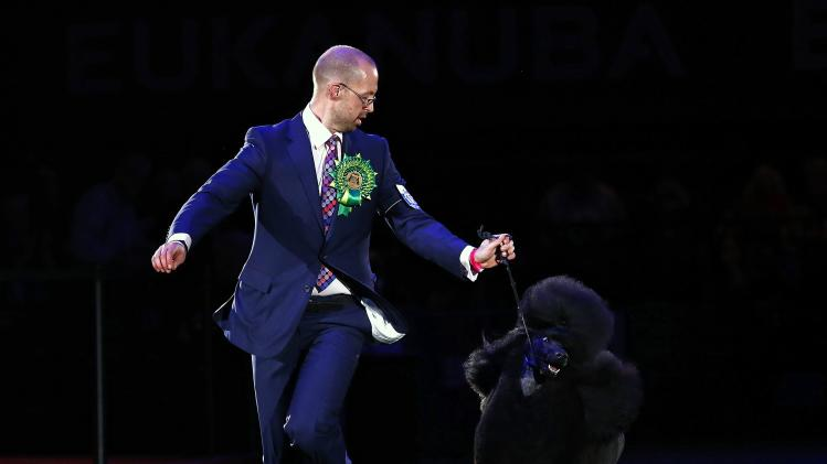 Handler Jason Lynn runs with Ricky the Standard Poodle before winning best in show during the Crufts dog show in Birmingham