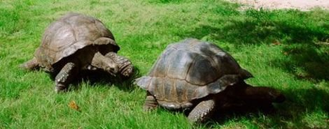 After 115 Years Together, Tortoises Go Their Separate Ways