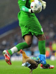 A chicken is put on the pitch by Blackburn fans in protest of the Venkey&#39;s ownership of the club during the English Premier League football match between Blackburn Rovers and Wigan Athletic at Ewood Park, Blackburn. Blackburn Rovers were relegated from the English Premier League with a match to spare after a 1-0 defeat at home to Wigan on Monday