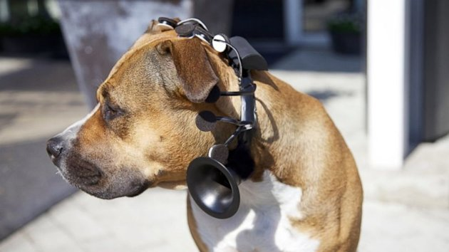 Talking Dog Device Ready to Hit Market Soon (ABC News)