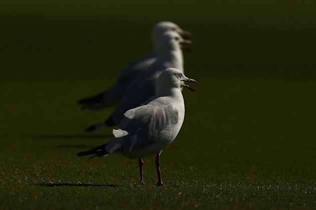 Cricket Photos of The Week