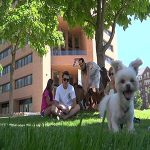 Furry Roommates: Dorms Allowing Cats and Dogs