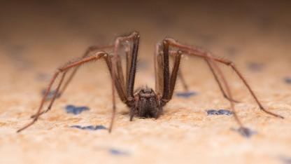 Cops Respond to Calls of Man Shouting 'Die! Die!' To Discover He's Trying to Kill a Spider