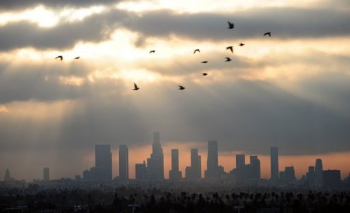 <p>Birds fly over downtown Los Angeles. A bear that became a minor star in Los Angeles, with over 24,000 Twitter followers, was returned to the wild after being found asleep in a tree, officials said.</p>