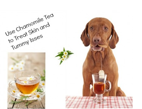 Chamomile Tea for Skin and Stomach Issues