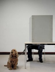 A dog waits while its owner votes for regional elections of North Rhine-Westphalia in Duesseldorf, western Germany. Chancellor Angela Merkel&#39;s party suffered a severe defeat Sunday in a pivotal German state vote likely to award her main rivals a major boost in their bid to soften her austerity drive in Europe