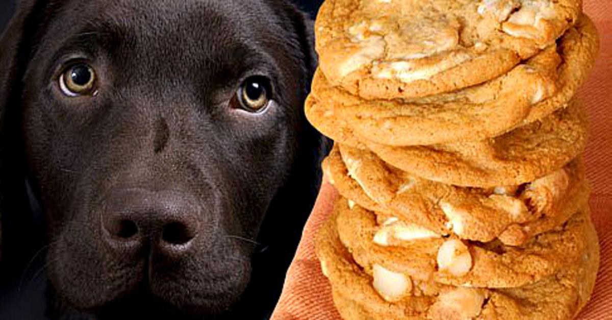 10 Table Foods Your Dog Should Never Eat