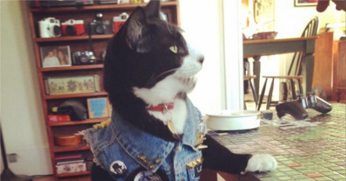 12 Cats That Think They're Human