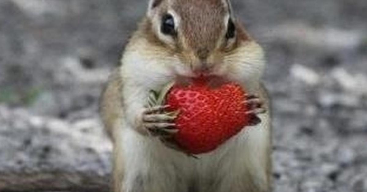 23 Pics That Prove Nothing's Cuter Than A Chipmunk