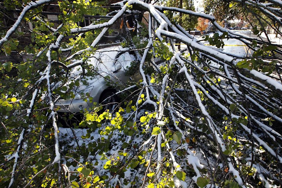 A car sits under a fallen tree early Sunday, Oct. 30, 2011, after an overnight snow storm in Newtown, Pa.  (AP Photo/Mel Evans)
