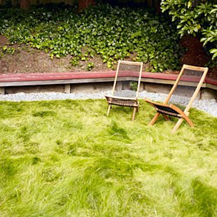 Replace the lawn with low-water grass
