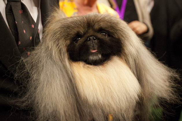 Malachy at Westminster in 2012 (Michael Nagle/Getty Images)