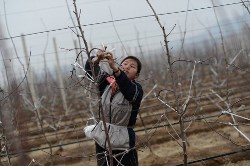Two-thirds of North Korea's population depend on state rationing and suffer varying degrees of chronic food insecurity