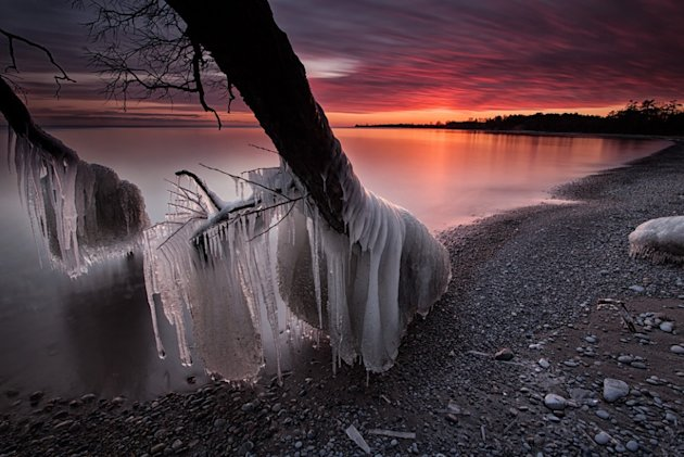 A violet and blood red sky is the backdrop for trees encased in ice - a result of violent storms which caused the lake to thrash the shore. This dramatic photo shows the effect of sub-zero temperature