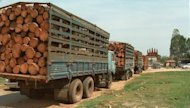 This file photo shows trucks loaded with &#39;unprocessed&#39; timber, waiting at a Cambodian border crossing with Vietnam. A Cambodian journalist who reported on rampant illegal logging in the country has been found murdered in the boot of his car, police said on Wednesday