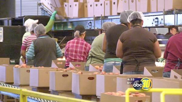 Labor shortage worries Valley growers