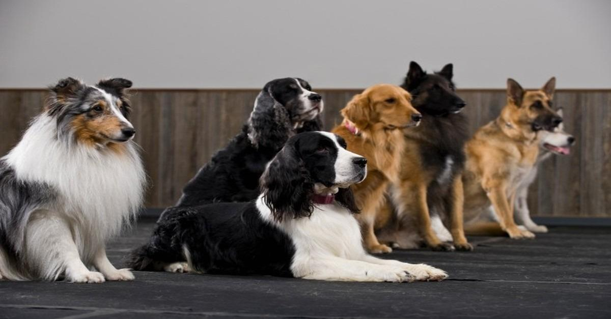 Which Dog is Right for You?