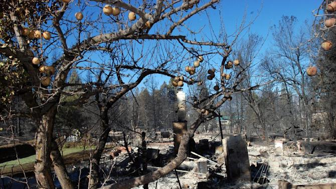 Apples hang on a tree, Tuesday, Sept. 16, 2014, next to a home destroyed by a wind-driven wildfire in Weed, Calif. An estimated 100 structures were burned in the blaze. (AP Photo/Jeff Barnard)