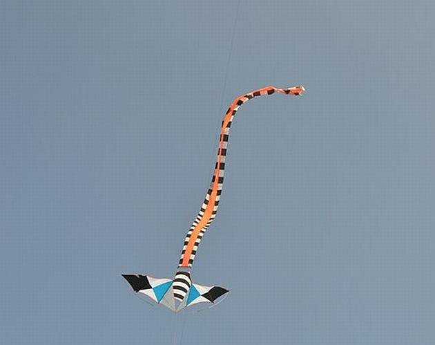 A snake kite on a tailspin
