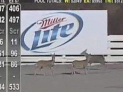 Raw: Deer take over Pa. racetrack