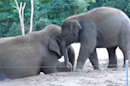 Awww: A whole subreddit filled with baby-elephant GIFs
