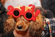 A dog wearing 2013 glasses poses as he celebrates the beginning of New Year's Day in Puerta del Sol in Madrid on December 31, 2012. World cities from Sidney to Dubai rang in the New Year with a spectacular global wave of firework displays