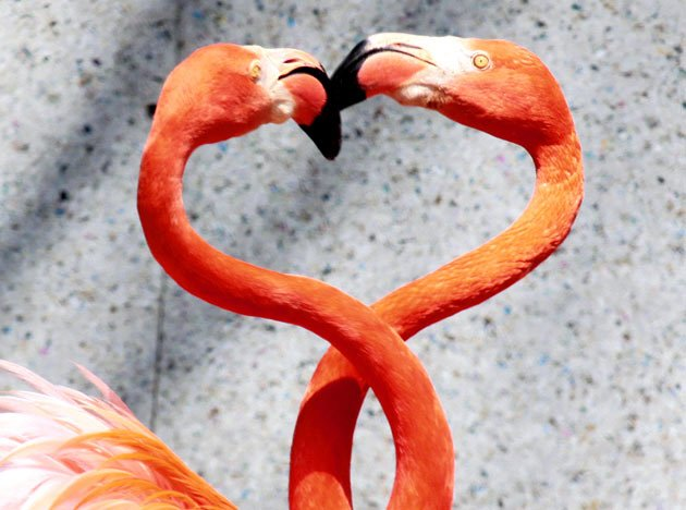 Animals in love on Valentine's Day