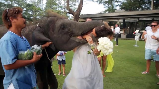 "Elephant ""eats"" bridesmaid"