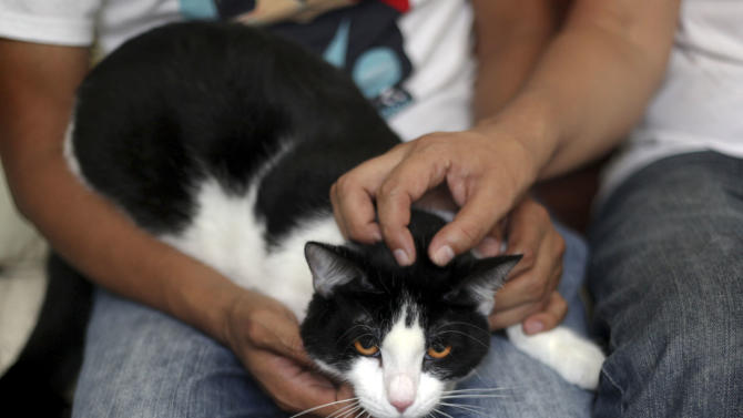 "CORRECTS DIEGO TO DAVID - Morris sit on the lap of David Cruz, left, as Sergio Chamorro pets Morris at their home in Xalapa, Mexico, Saturday, June 15, 2013. Put forth as candidate by Chamorro and a group of friends after they became disillusioned with the empty promises of politicians, Morris, a black-and-white cat with orange eyes, is running for mayor of Xalapa in eastern Mexico with the campaign slogan ""Tired of Voting for Rats? Vote for a Cat."" And he is attracting tens of thousands of politician-weary, two-legged supporters on social media. (AP Photo/Felix Marquez)"